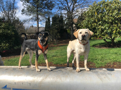 2dogs on boat daycamp 1024