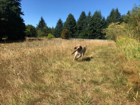 dog running with stick in field 1024